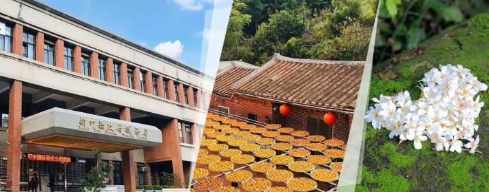 新竹縣政府稅務局大樓、柿餅和桐花
